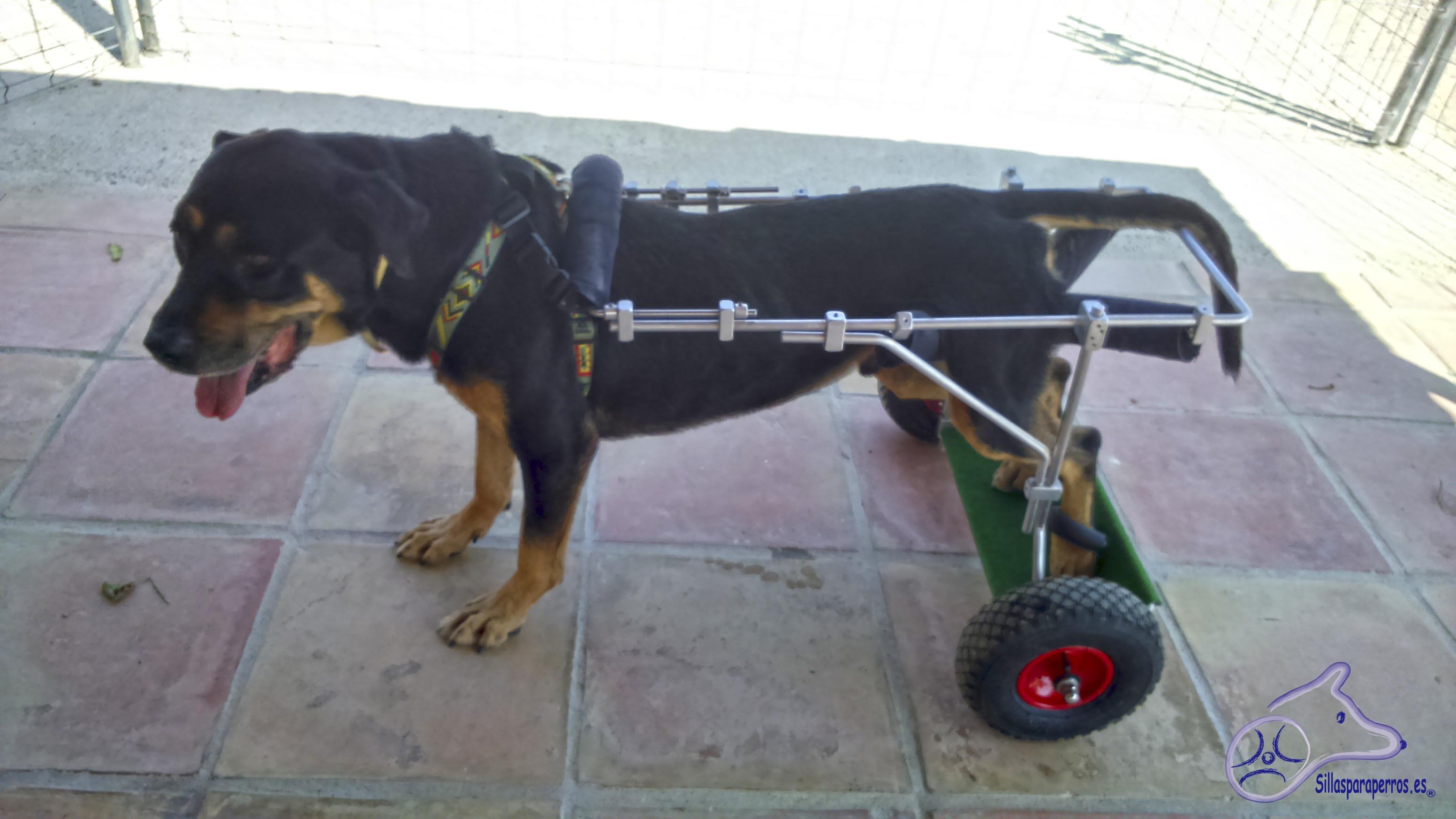Silla de ruedas para perros de 20 a 40 kg sillas para perros for Sillas para perros