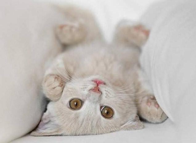 gatos-ikea