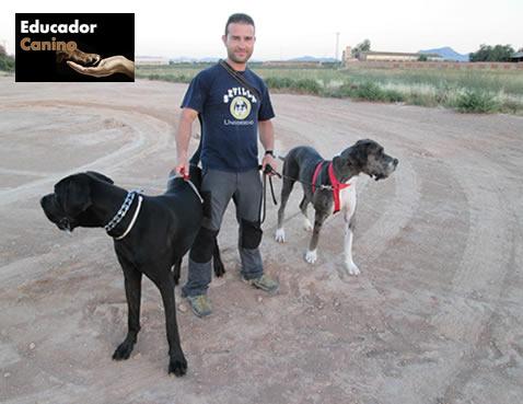 adiestrador-canino-murcia2