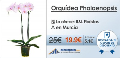 orquidea-phalaenopsis-r&l-floristas